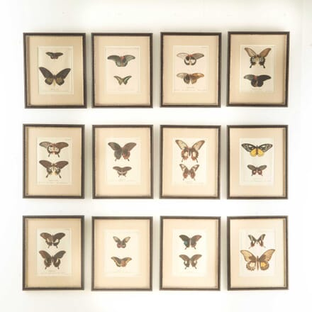 A Set of 12 18th Century Engravings of Butterflies WD608212