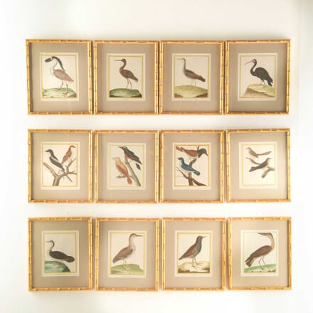 A Set of 12 18th Century Martinet Birds WD608211