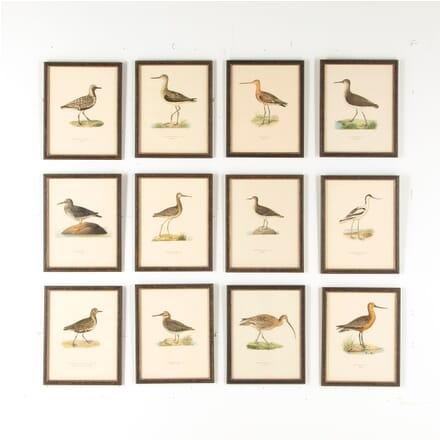 Set of 12 Swedish Water Bird Lithographs WD6057535