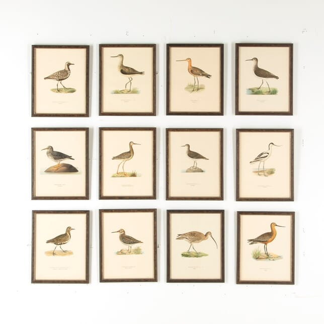 Set of 12 Swedish Water Bird Lithographs WD6057535