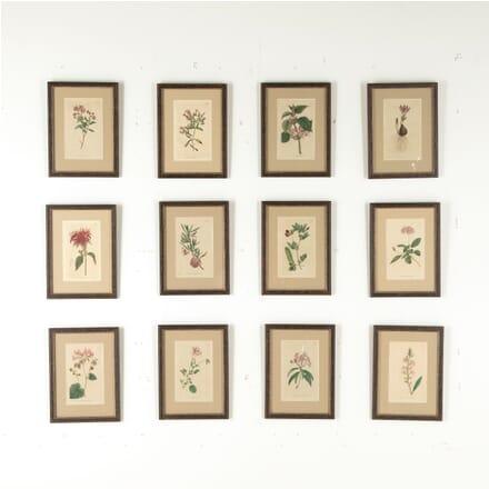 18th Century Curtis Botanicals WD6010711