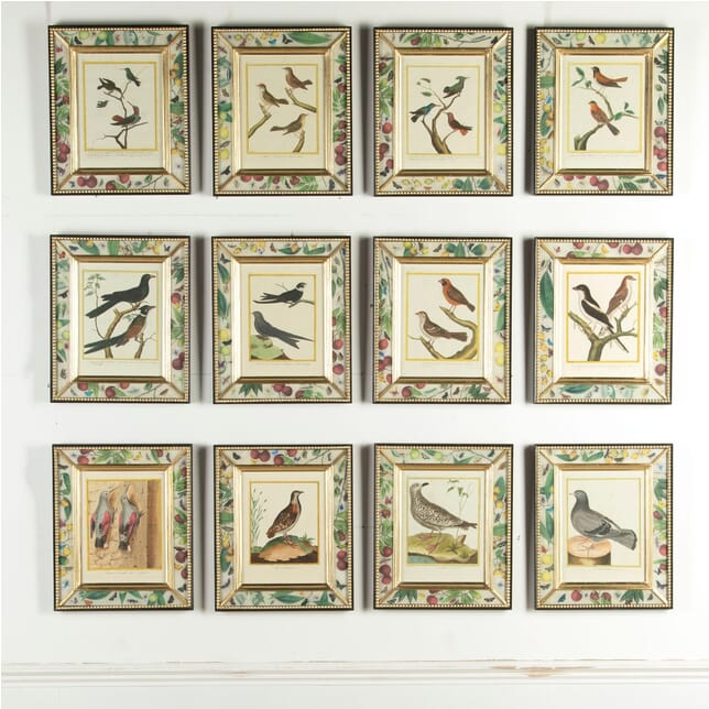 18th Century French Engravings of Birds WD9913316