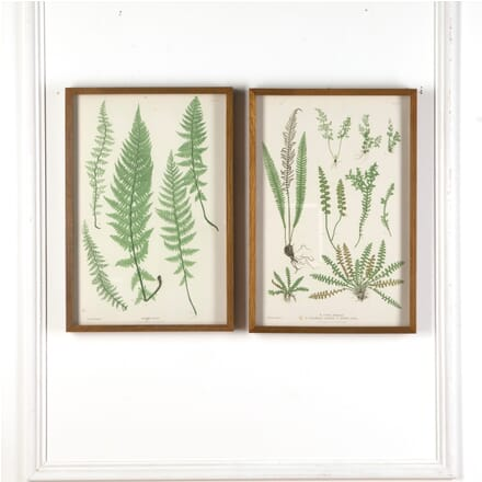 19th Century 'Ferns of Great Britain & Ireland' Prints WD7610899