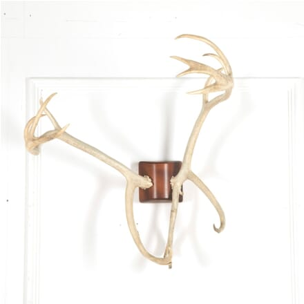 19th Century Set of Antlers WD167764