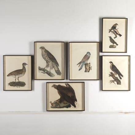 Engravings of British Birds WD7612475