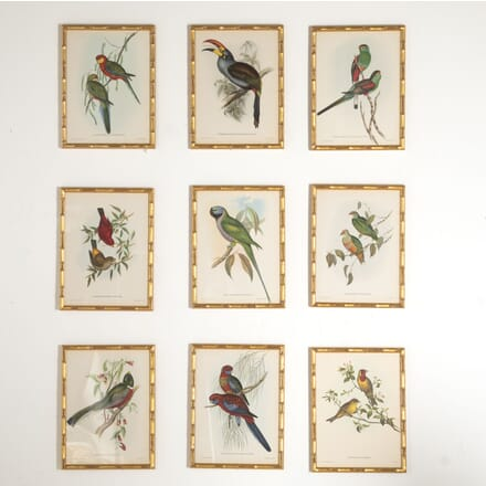 Set of Nine Lithographs of Exotic Birds WD6012839