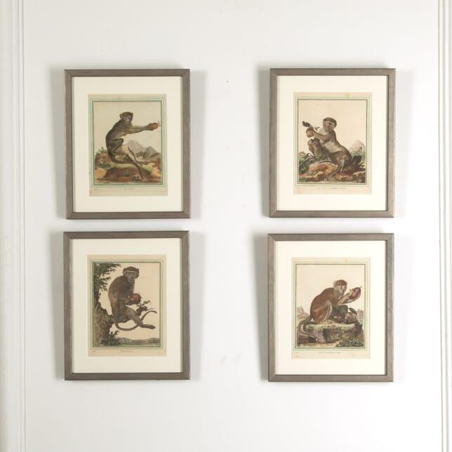 Set of Four Monkey Prints by Buffon WD0212060
