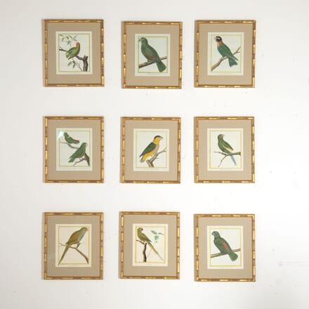 Set of Nine 18th Century Martinet Parrots WD6012838