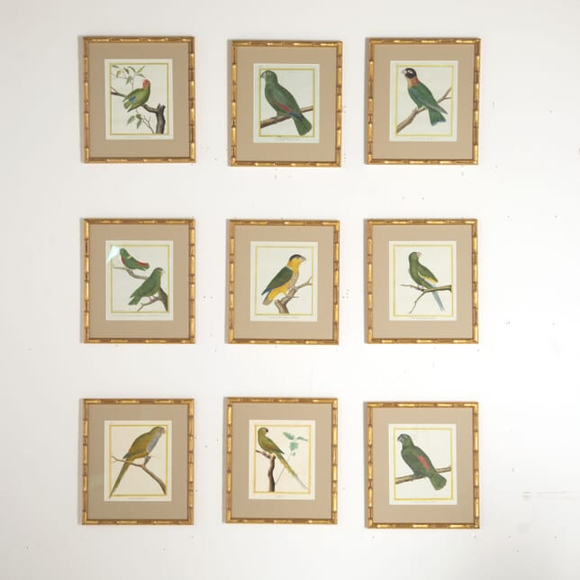 Set of Nine 18th Century Martinet Parrots WD6012838