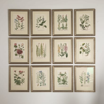 Set of 12 Botanical Engravings by Johann Weinmann WD6012880