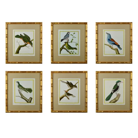 Set of 12 18th Century Martinet Birds WD6014655