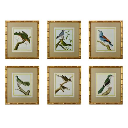 Set of 12 18th Century Martinet Birds WD6014655