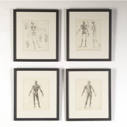 Set of Four 19th Century Engravings of Human Form from Ackermann's 'Cabinet of Arts' WD8015116