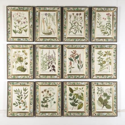 Set of 12 Botanical Engravings by Weinmann WD7615775