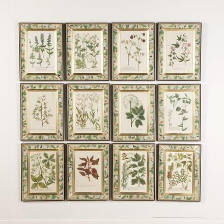 Set of 12 Botanical Engravings by Weinmann WD7617071