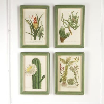 Botanical Engravings by Johann Wilhelm Weinmann WD7617476