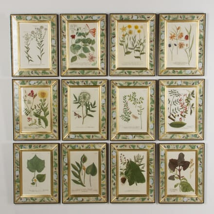 Botanical Engravings by Weinmann WD7617475