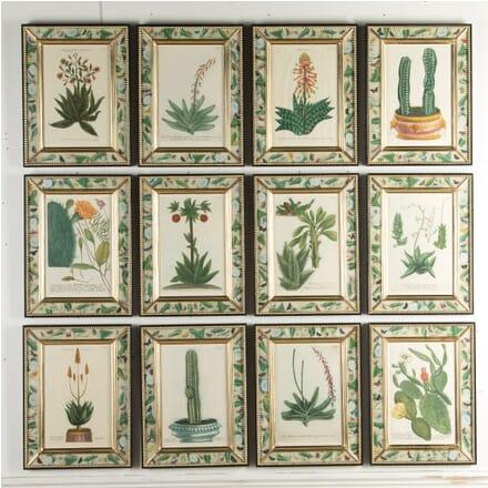 Botanical Engravings by Weinmann WD9915916