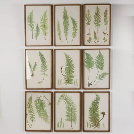 Botanical Prints by Thomas Moore WD7617474