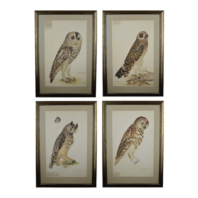 Set of Four Rudbeck Owl Prints WD6016095
