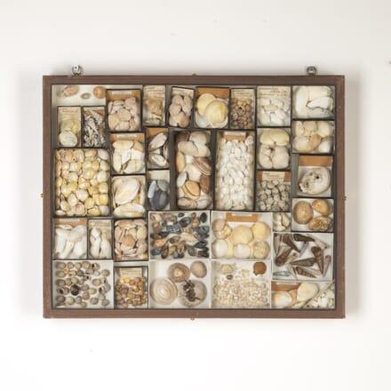 Collection of Seashells DA7614799