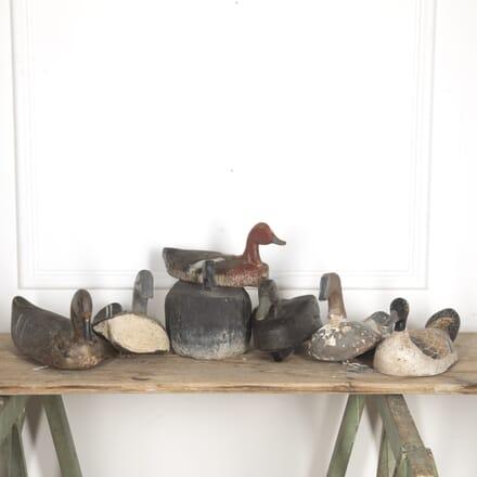 Collection of Seven Decoy Ducks DA1515405