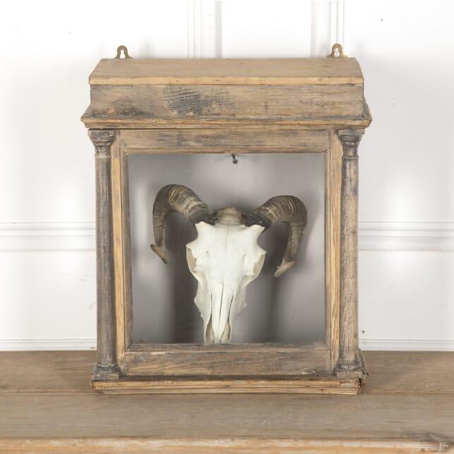 Decorative Encased Sheep's Skull DA9913437