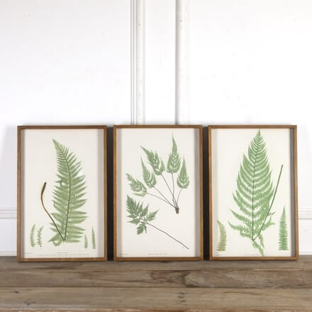 Ferns of Great Britain and Ireland WD9014863