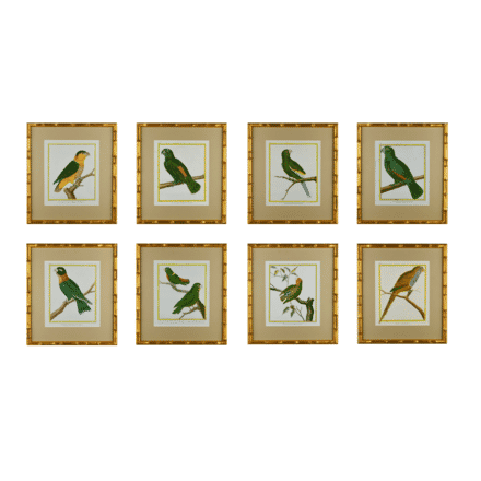 Set of Eight 18th Century Engravings of Martinet Parrots WD6012838