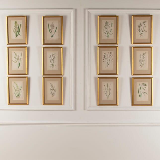 Set of 12 Handcoloured Grasses WD6012166