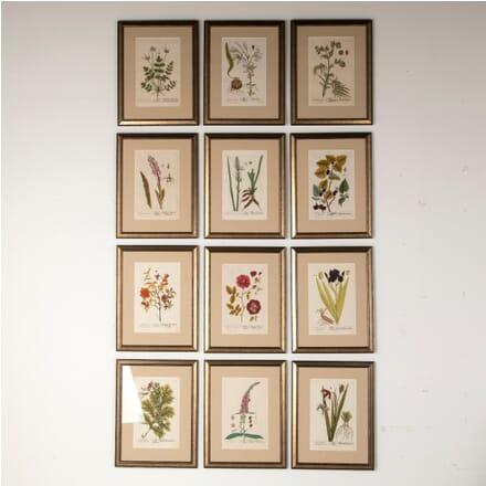 Set of 12 Elizabeth Blackwell Botanical Engravings WD6012164