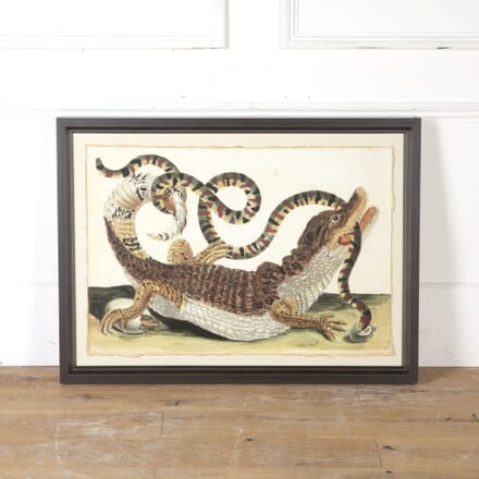 Large Cayman and Snake Lithograph WD9015475