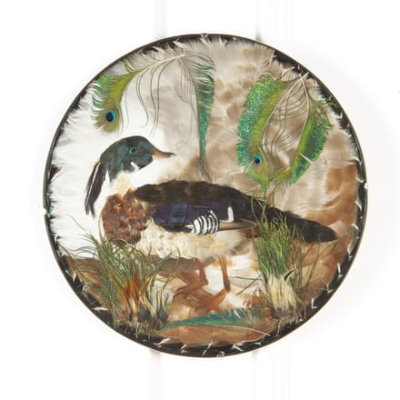 Mid-Century Feather Picture of A Tufted Duck DA8017314