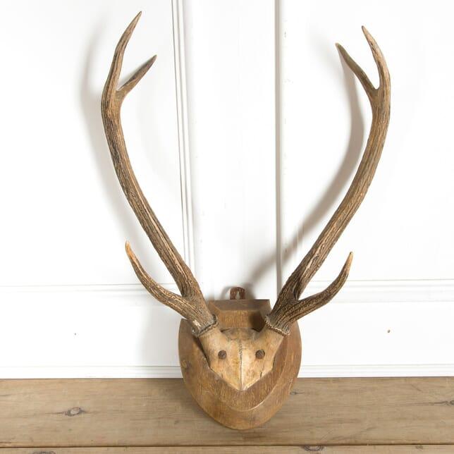 Mounted Deer Antlers DA1510055