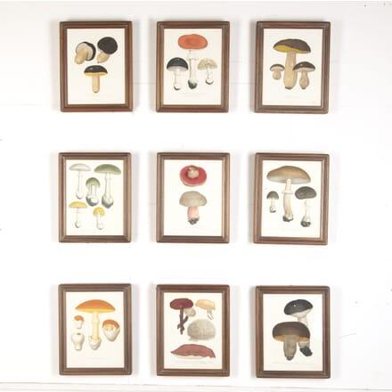 Set of Nine Mushroom Engravings by Roques WD7615776