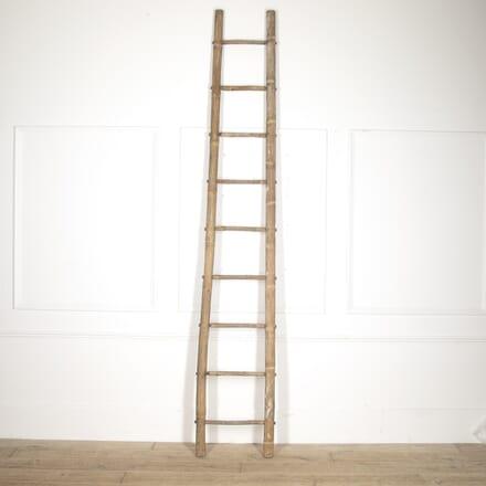 Tall French Bamboo Ladder DA1515223