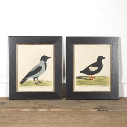Pair Of Framed Birds WD1316779