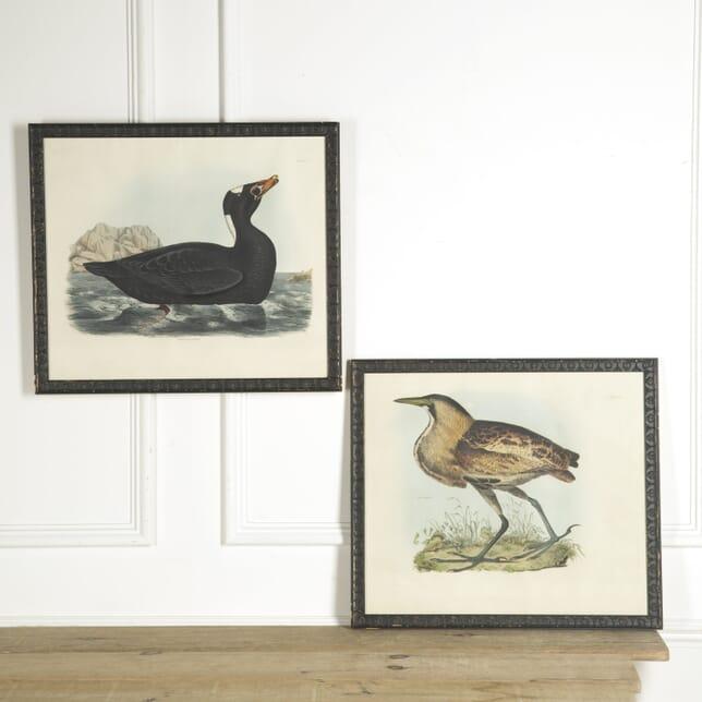 Pair of Large Bird Prints WD139984