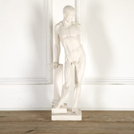 Sectional Plaster Cast of a Flayed Man DA8014325