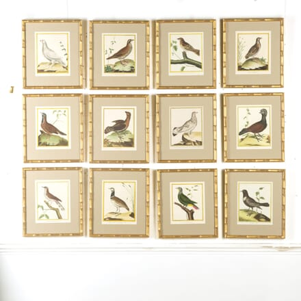 Set of 12 18th Century Martinet Bird Engravings WD609563