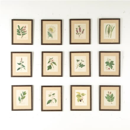 Set of 12 Botanical Engravings by Woodville WD6010712