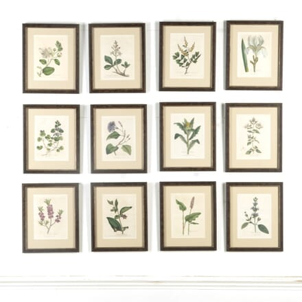 Set of 12 Botanical Engravings by Woodville WD609564