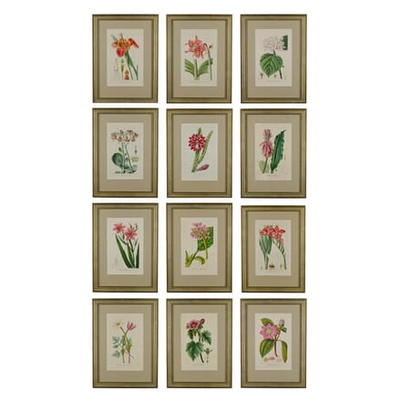 Set of 12 Botanical Engravings from Bessa WD6016833