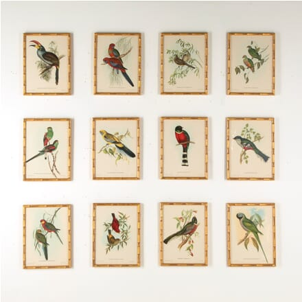 Set of 12 Exotic Bird Lithographs WD6010740