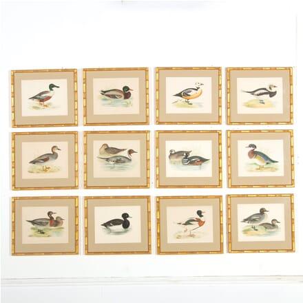 Set of 12 Original Hand Coloured Woodblock Engravings of Ducks WD609126