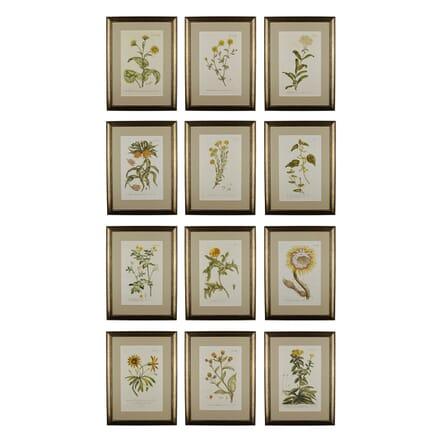 Set of 12 Botanical Engravings by Philip Miller WD6016831