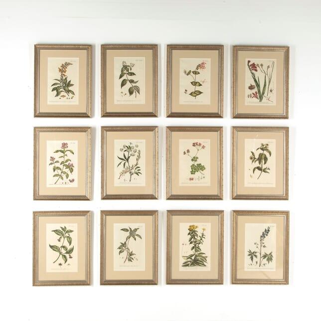 Set of 12 Philip Miller Prints WD6010713