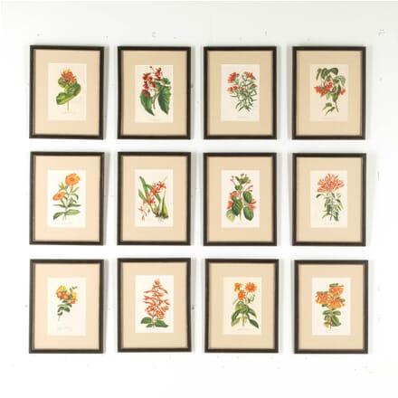 Set of 12 Red Van Houtte Flowers WD6059322