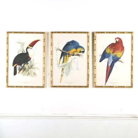 Set of 3 Exotic Bird Lithographs WD609561