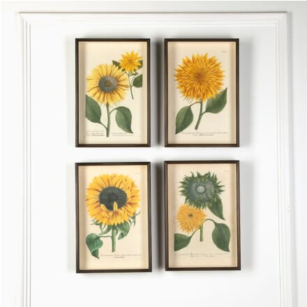 Set of 4 Weinmann Botanicals WD7610935